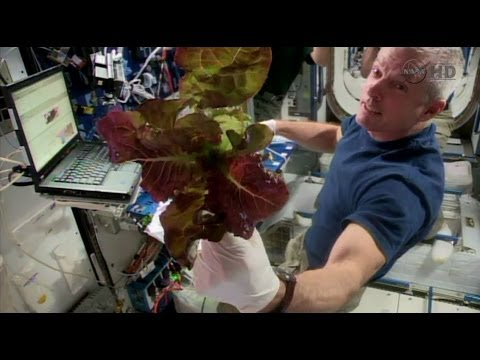 Space Station Live: Veggie Harvest Shows Promise