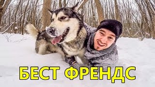 Сибирский ХАСКИ и Аляскинский МАЛАМУТ GOPRO HERO4 BLACK EDITION