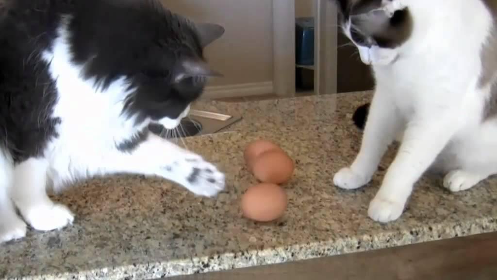 חתולונובלה - סדנת בישול