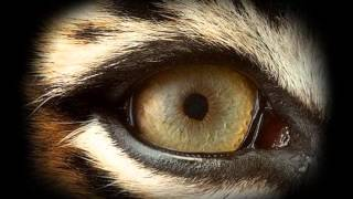 survivor-eye of the tiger.guitar  instrumental