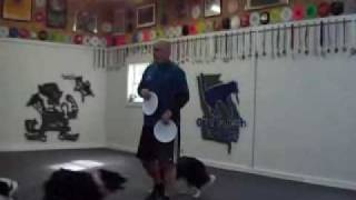 "Disc Frisbee Dog Training ""basic Standard Backhand Floater Throw"""