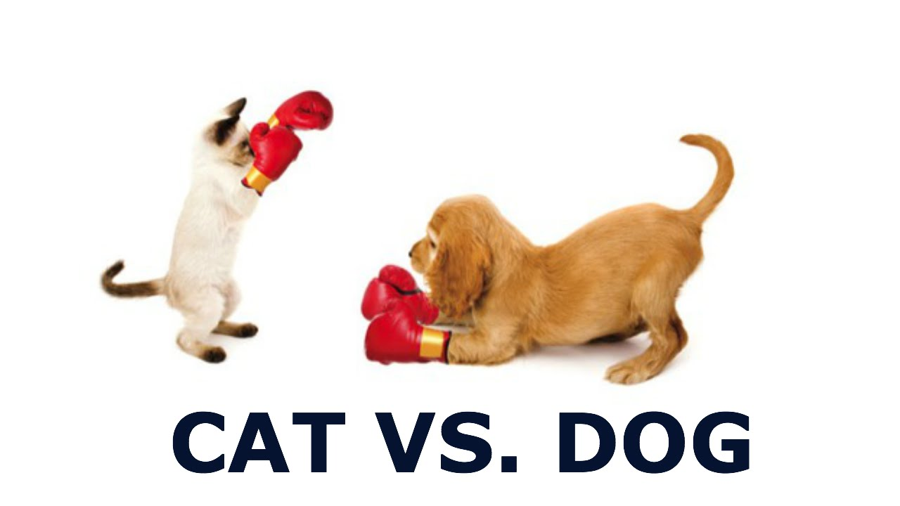 cat vs dog It's an age-old debate, a tale as old as time, a common icebreaker on first dates  are you a cat person or a dog person the whole cats versus.