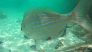 Snorkeling at the Destin Jetties - raw video 5
