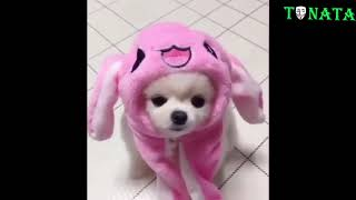 Funny Animals Compilation 2020 #1 - Cute Puppy Doing Things
