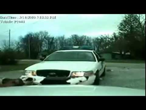 Cat Watches Dog attack Cop Car