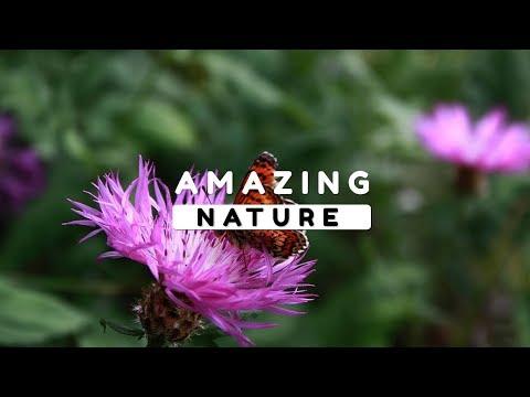Beautiful Nature Video in Full HD - Spring Season - Peak Kekil - Episode 1 - 13 Minute