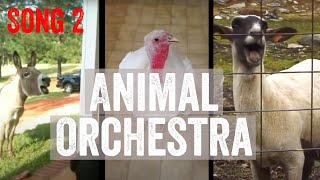 The Fabulous Animal Orchestra Supergroup – Song 2