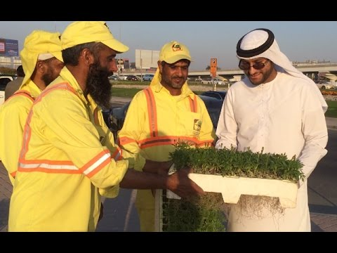 Dubai Municipality distributes saplings to residents