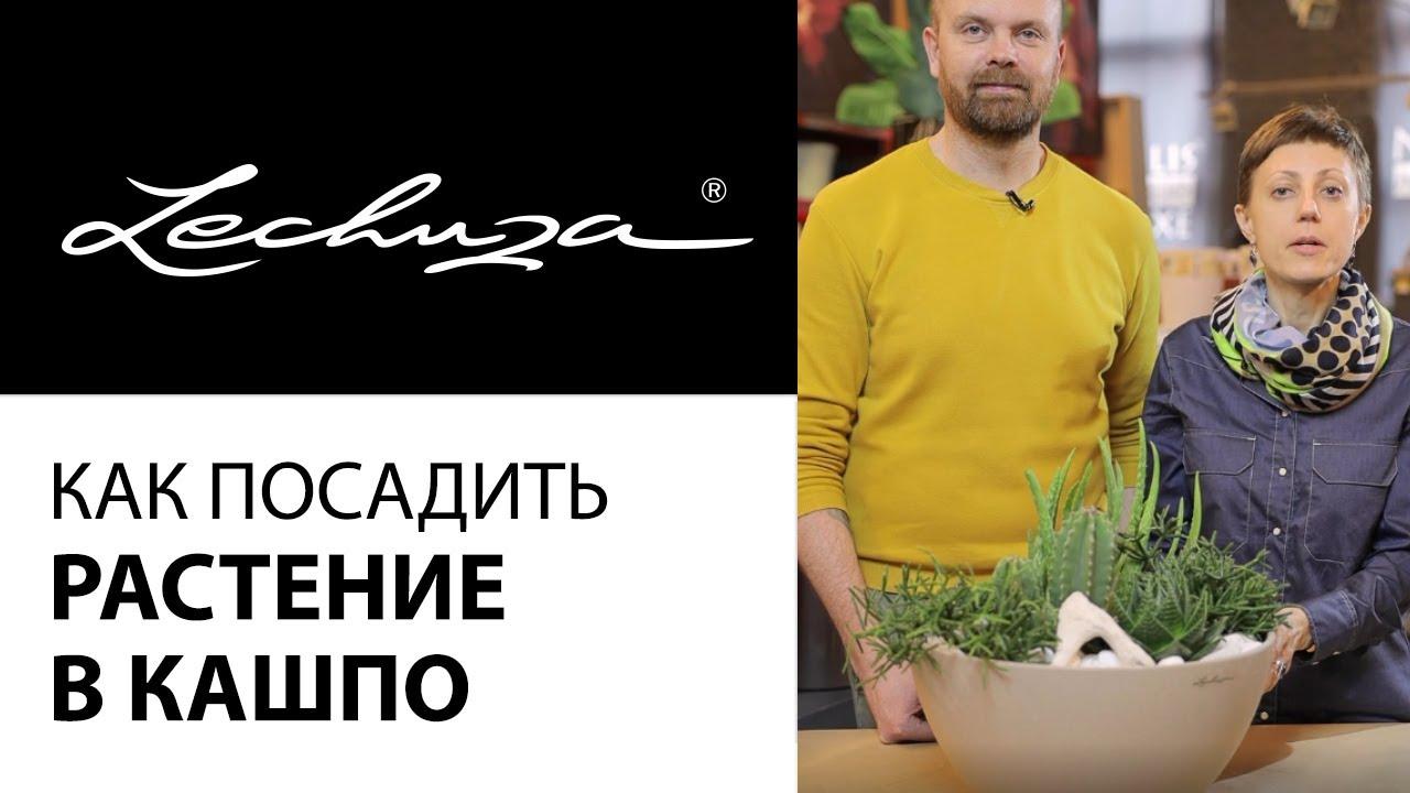 Кашпо Lechuza. Как посадить растение в кашпо Лечуза