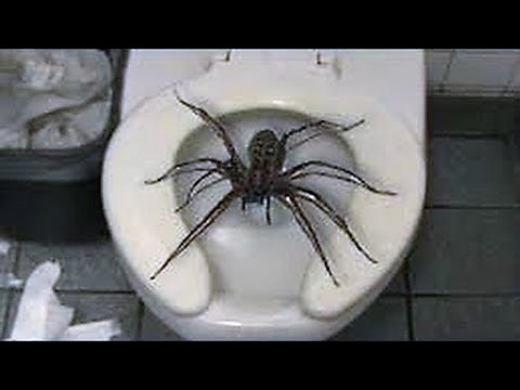 12 Scary Pics Of Giant Spiders Explained Youtube