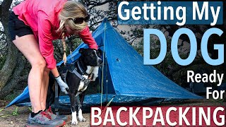 Getting My Dog Ready For Her First Backpacking Trip