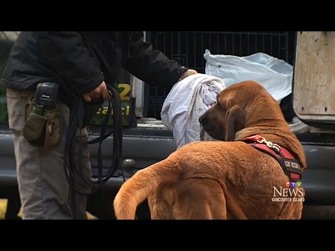 Bloodhounds Used To Track Down Missing B.C. Rescue Dogs