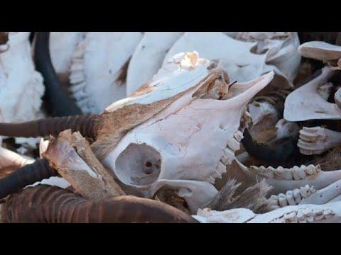 شاهد: المجاعة تهدد جنوب القارة الإفريقية في ظل تعمق أزمة تغير المناخ…  - 16:59-2020 / 2 / 13