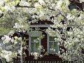 домик окнами в сад исполнители братья радченко