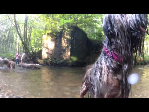 GoPro HD: 30 happy Briards running free at the river walk