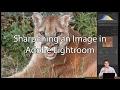 How to Sharpen Images in Adobe Lightroom