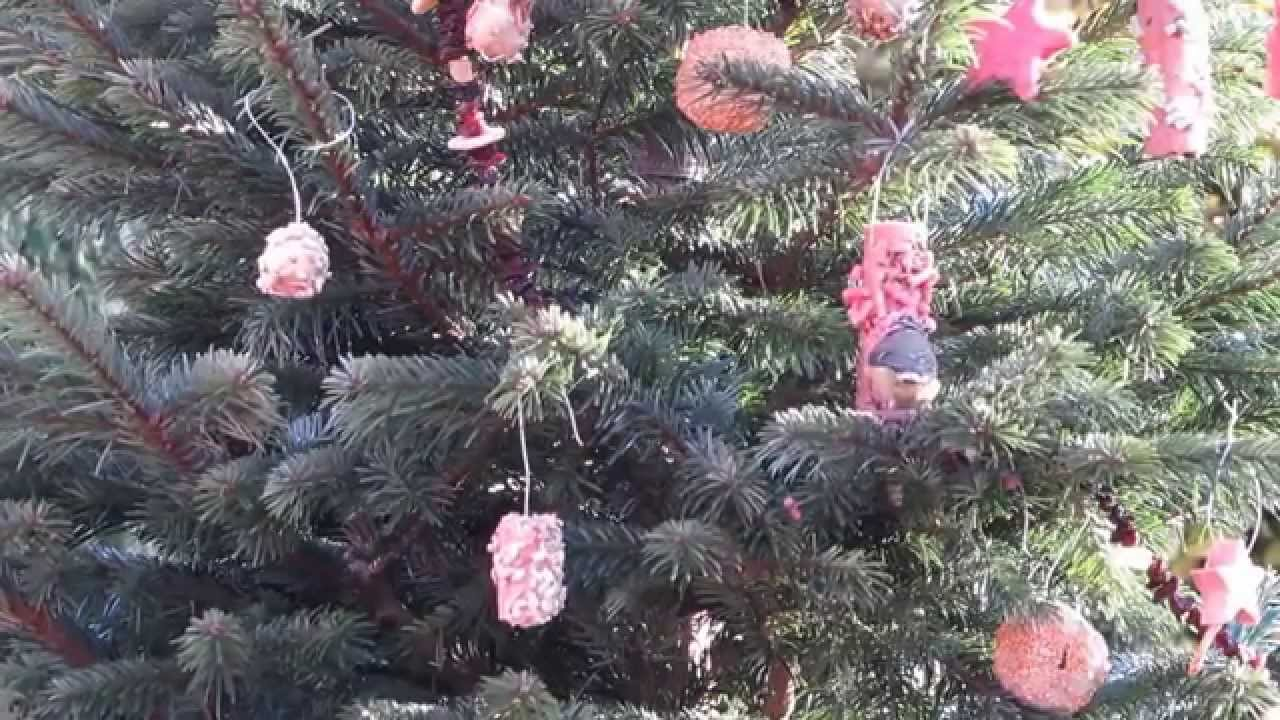 A Christmas Tree For Wild Birds