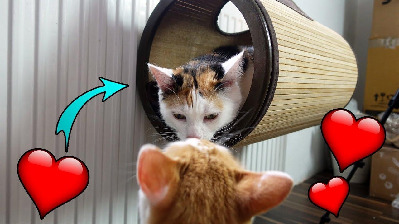 Katzen Gadgets