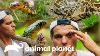Aproximando-se das serpentes mais mortais da Ásia | Perdido na Ásia | Animal Planet Brasil