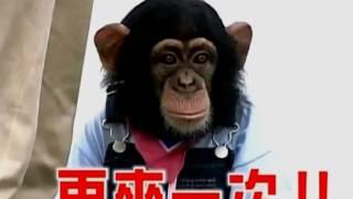 Умная Обезьяна В Японии