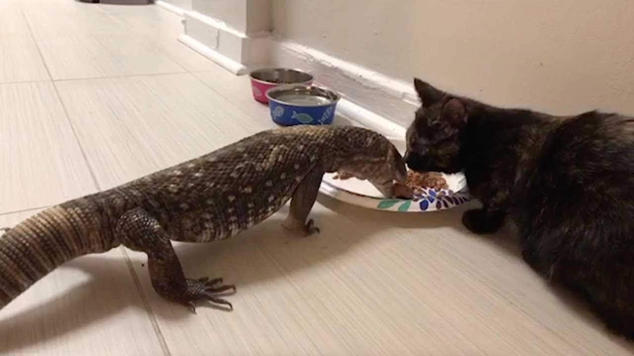 Adorable Kitten And Lizard Share Food Youtube