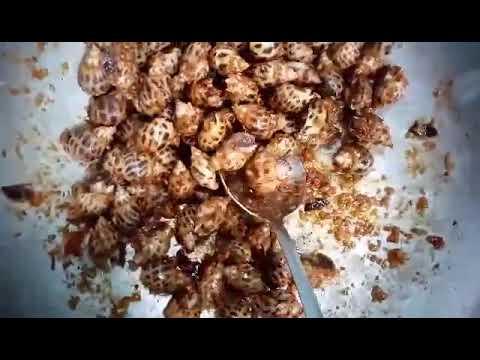 Chảo ốc hương cháy bơ tỏi cay 🌶🌶