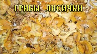 Простой рецепт Как приготовить грибы Лисички.