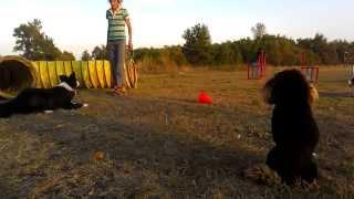 Kisses of Angel J - мотивация, драйв и поощрение в работе спортивной собаки