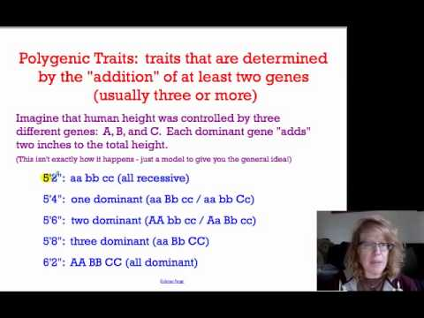 What Are Examples of Polygenic Traits? | Reference.com