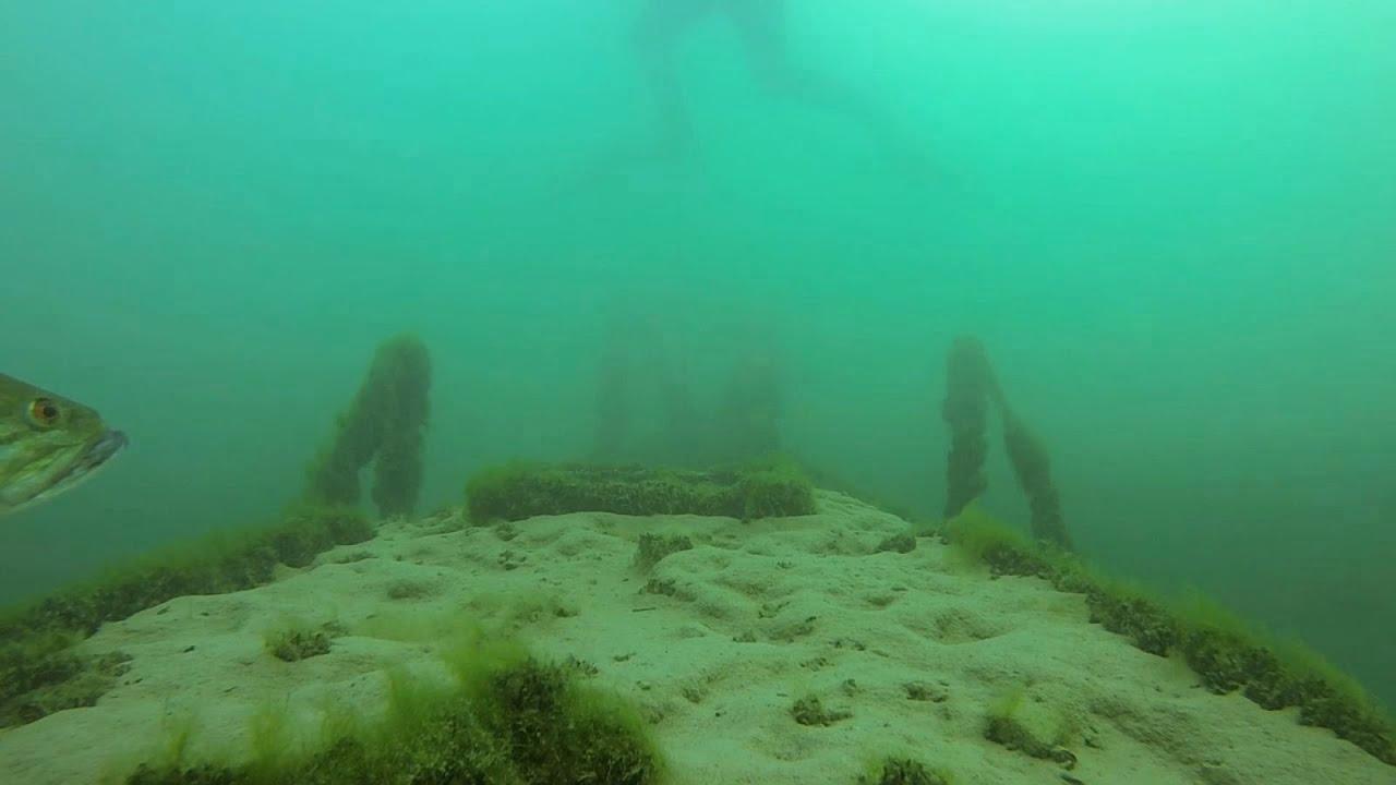 Scuba Diving Lake Havasu Youtube