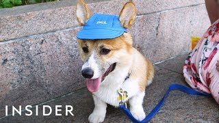 Hat Protects Your Dog From The Summer Heat