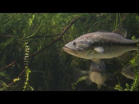 Eustis Freshwater Fisheries Research Lab