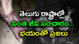 Alien Found In Adilabad Forest, CC TV Footage : Video Goes Viral - Oneindia Telugu