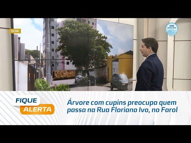 Árvore com cupins preocupa quem passa na Rua Floriano Ivo, no Farol