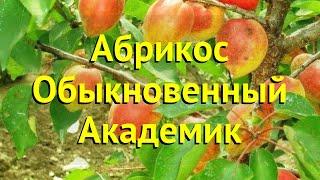 Абрикос обыкновенный. Краткий обзор, описание характеристик prunus armeniaca Академик