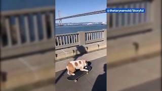 Adorable bulldog steals skateboard, rides it on San Francisco's Embarcadero