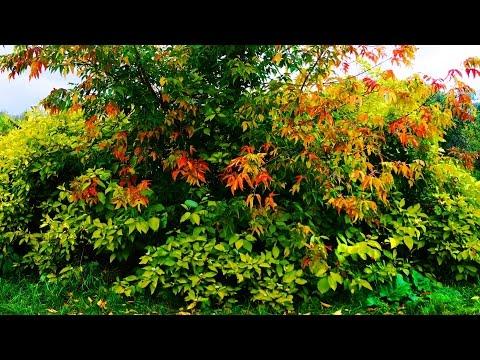 Краски осени… Осень в сквере на Ботанике… Екатеринбург