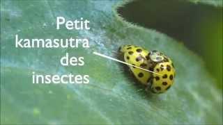 Petit kamasutra des insectes