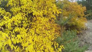 Осенью красивый лес...