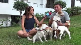 CASA MAGNA  Jack Russell Terrier Perú