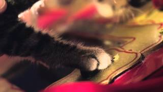 Santa Claws - Trailer