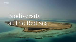 Biodiversity at The Red Sea