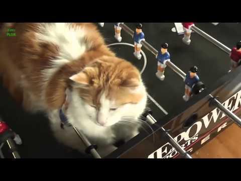 รวมภาพแมวนอน น่ารักๆ