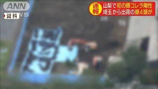 山梨で豚コレラ感染を確認 埼玉から出荷の豚4頭(19/09/13)