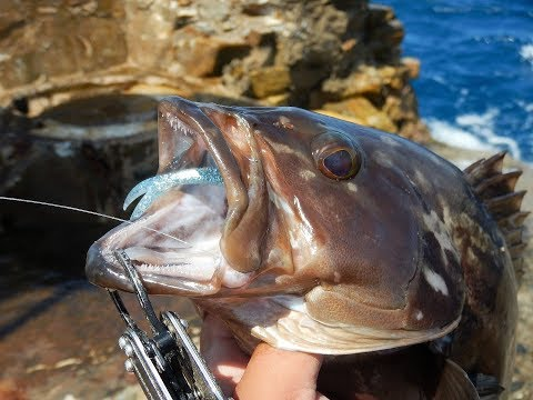 H.R.F. Two awesome groupers on soft lures! Feat ZENAQ Snipe S86XX Longcast