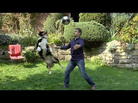 fußballhund-cleo-übt-kopfball---soccerdog-training-header---australian-shepherd