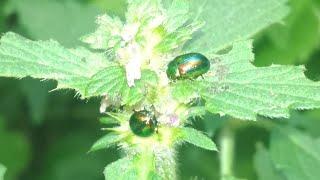 Урок биологии😁Мои летние фотозарисовки «Ягодки & листики» 😉🍓☘️🍒🌿👍My photo «Berries and leaves»