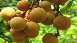 Top 10 Rarest Fruits in the World