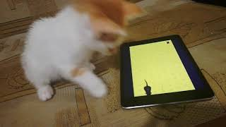 Cat catching virtual mices - funny video with cats