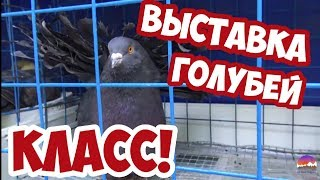 Download Выставка голубей в парке Гомеля. Exhibition of pigeons in the park Gomel. 2019  # 1 Mp3 and Videos